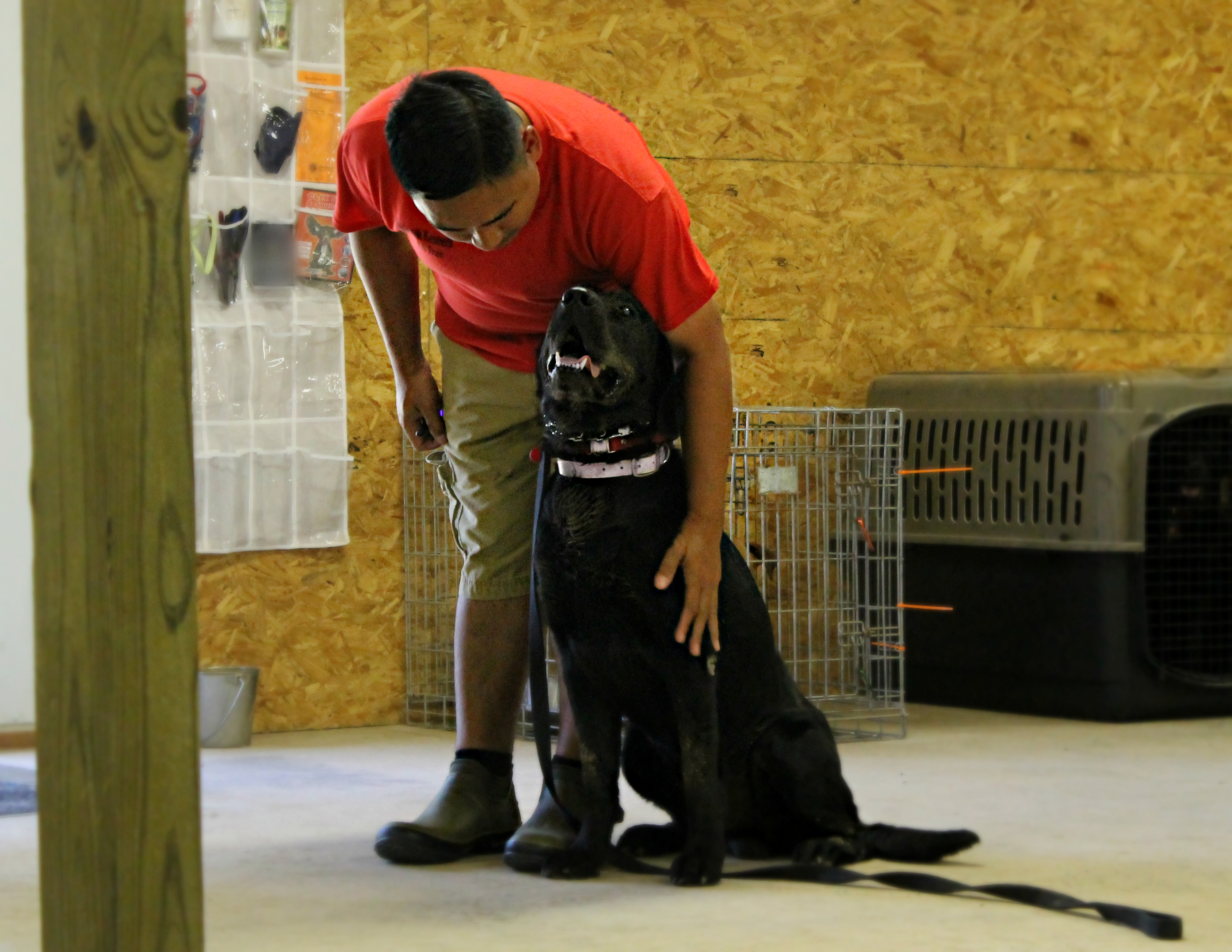 Board and train | Dog training | Canine Behavior Solutions