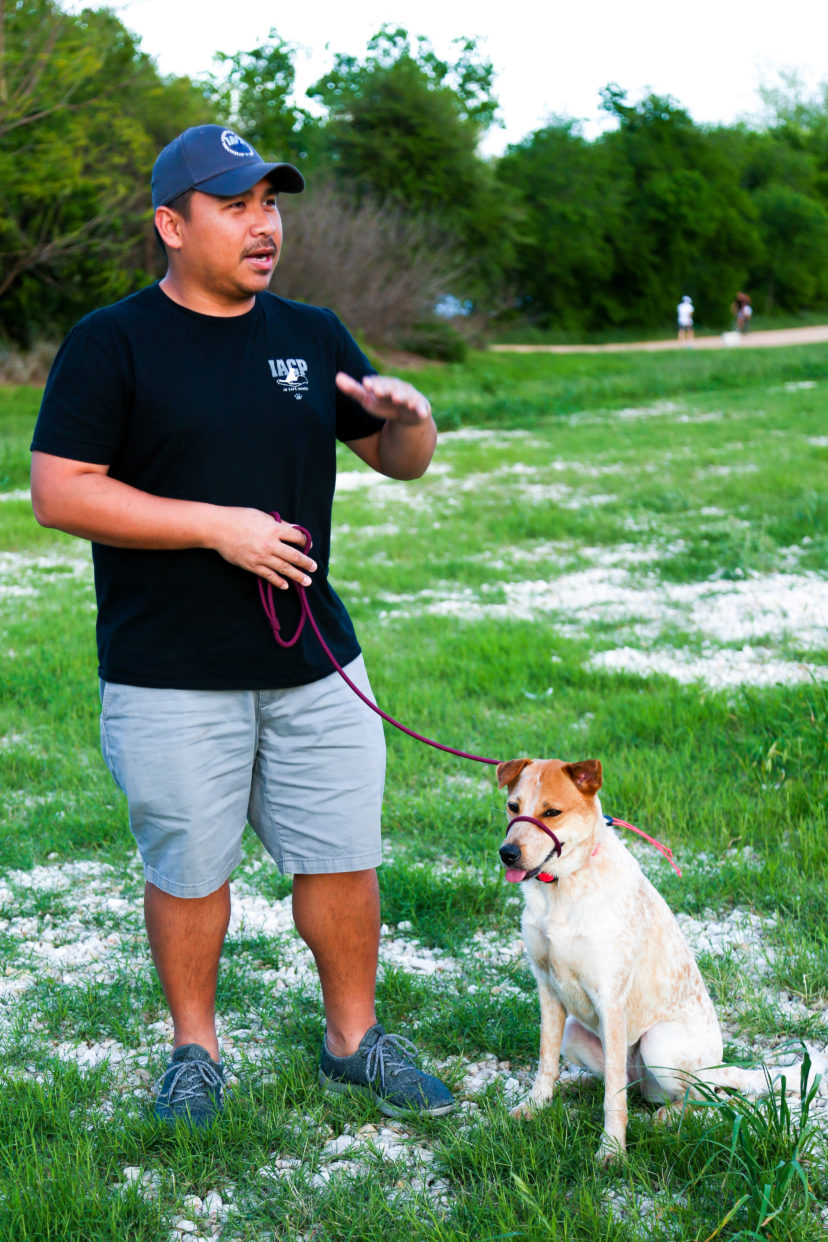 In-HomeTraining | Dog training Austin