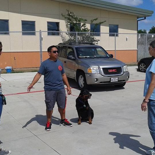 Training in your home | Dog training Austin - Round Rock, TX
