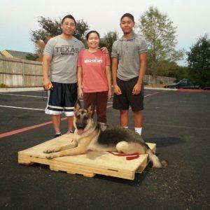 Dog training | Austin | Canine Behavior Solutions