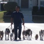 Dog training Austin | Canine Behavior Solutions