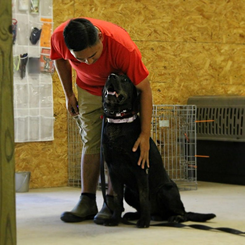 Dog Training Georgetown Tx
